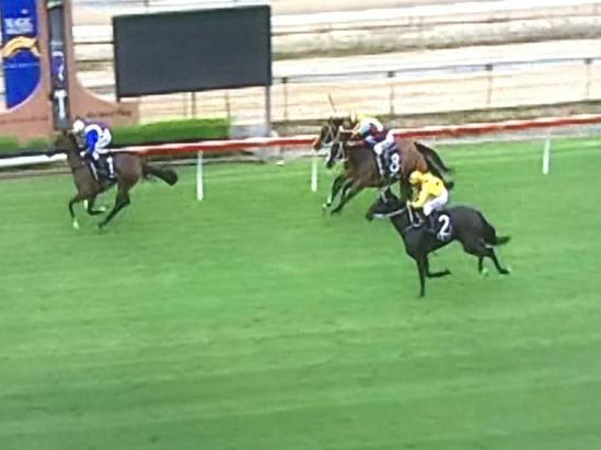 Spinning Gold Runs Another Consistent Race Today At Wyong