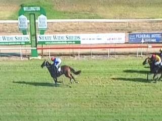 Bench Star Takes Out The 5th At Wellington In Fine Fashion