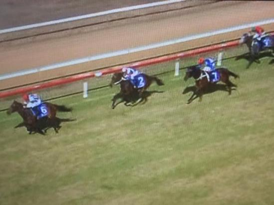 Lucky Cash Finishes 3rd In The 900m Dash At Cessnock