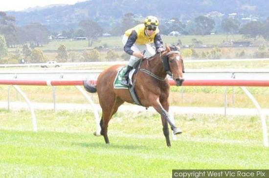 Orlando Jack To Fly The Flag For The Team On Tuesday At Taree