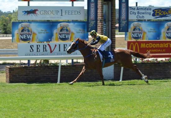 Pirate Jack To Compete At Armidale On Monday