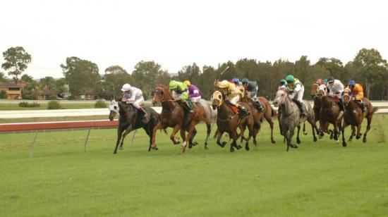 Crocea To Compete At Taree Melbourne Cup Day