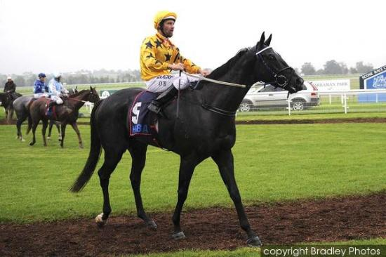 Spinning Gold To Compete At Warwick Farm On Wednesday