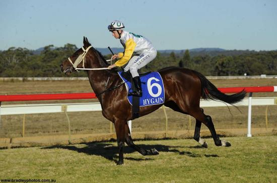 Cervinia A Likely Starter At Wyong