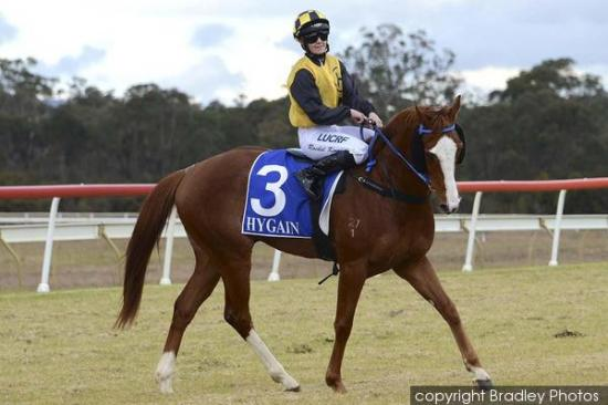 Pirate Ben To Compete At Rosehill On Saturday