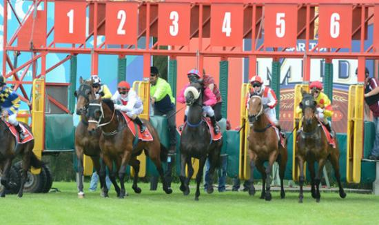 Wyong Stable Runners For Sunday