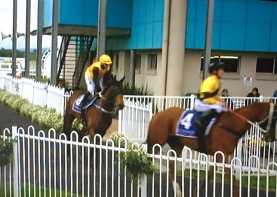 Bend It Like Benny Runs A 2nd At Muswellbrook