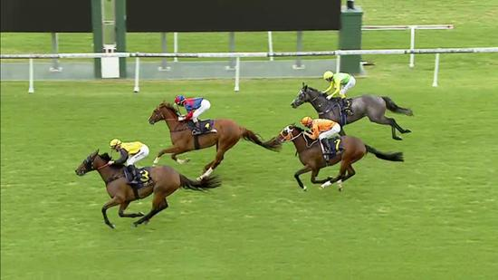 Pirate Jack Wins Back To Back Races At Gosford