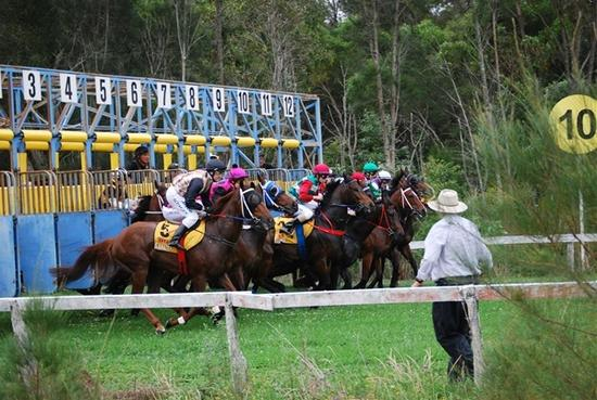 Gypsy Jean To Compete At Kempsey On Friday
