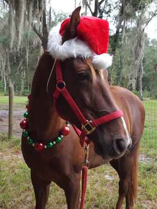 Merry Christmas From The Damien Lane Racing Team