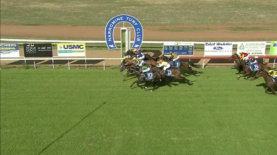 Neon Jungle Runs A Solid 2nd In A Blanket Go At Narromine