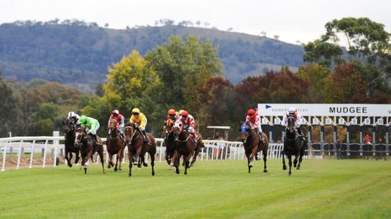 Mudgee Stable Runners For Damien Lane
