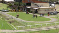 The Lane Yard Prepares Runners For Taree On Friday