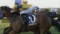 Scatter Blast To Compete At Taree On Saturday Under Jake Hull