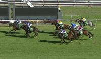 Kanguru Runs Third Under Travis Wolfgram At Gosford