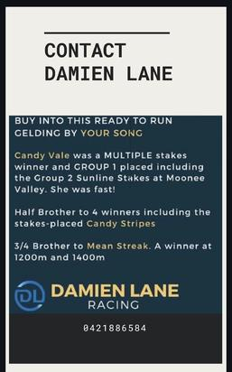 Exciting Opportunity To Race This One With Us Your Song Out Of A Multiple Stakes Winning Mare