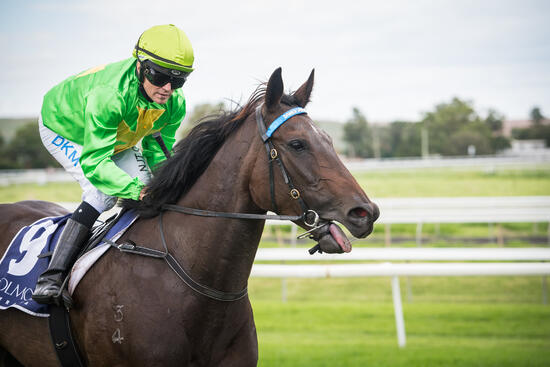 Oakfield Double at Muswellbrook