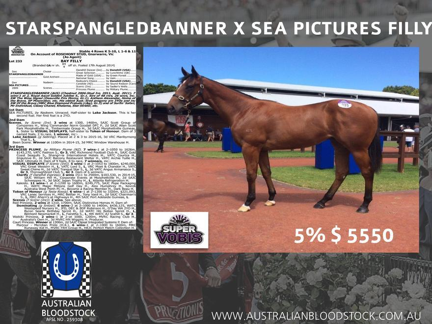 Starspangledbanner Filly SOLD OUT !