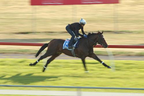 Protectionist Continues To Please At Weribee