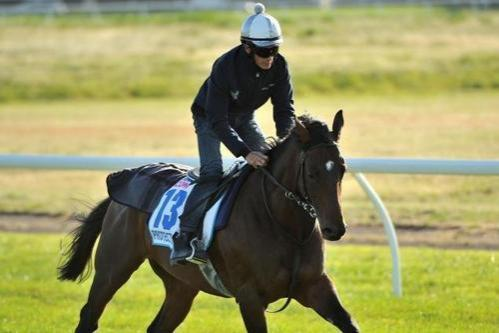 Melbourne Cup Hope Draws Well In Herbert Power