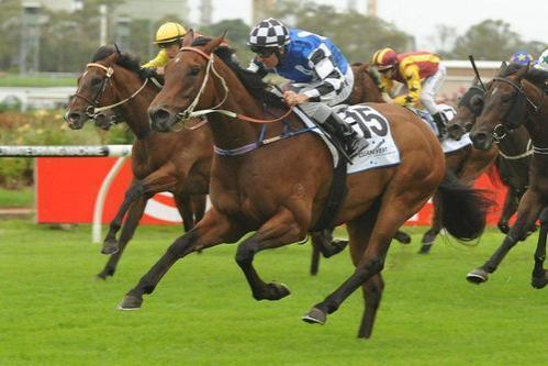 Whitlam Can Boounce Back At Rosehill On Saturday