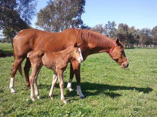 A New Filly Joins Our Family!