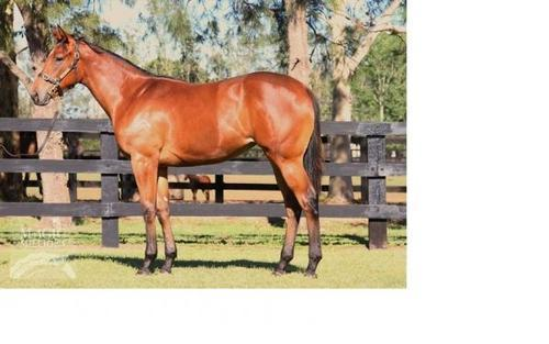 Magic Millions ONEMORENOMORE Filly For Sale