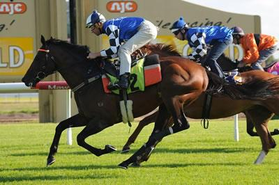 Can Protectionist Follow Fiorente?