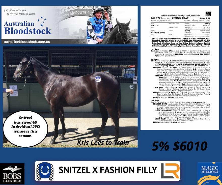 Last 10% in Snitzel filly available