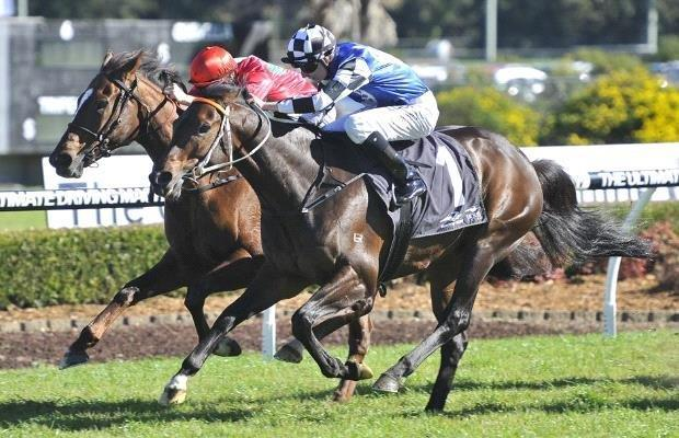 Lees Stayer In Tune For Wyong Cup