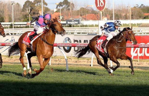 Plenty on the line for Brave Smash at Moonee Valley
