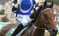 Big Duke leads home Australian Cup charge