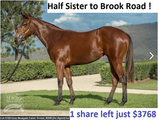 Smart Missile X Cool Gal Filly