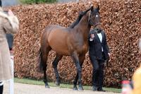 Protectionist on parade