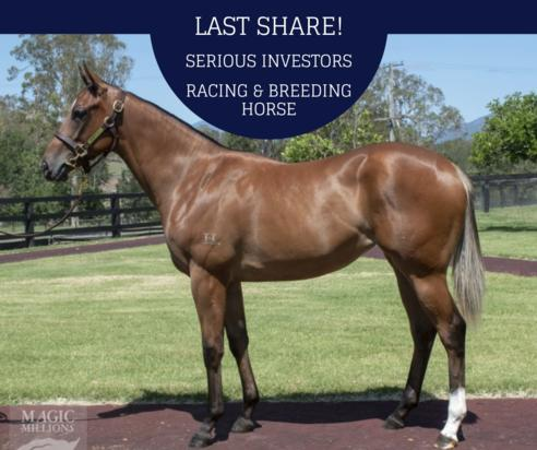 Redoute's Choice X Tracy's Image Filly