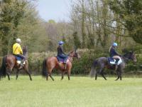 Danebury Horses- - 1.jpg
