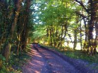 DaneburyTrees.jpg