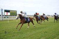 NAPOLEON Scoops the Newcastle Hunter Stayers' Cup