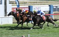 Heroic Hirokin - 2018 Bathurst Cup Decided By Photo Finish