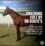 Dr Doute's Colt Available