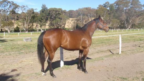 God's Own Filly for lease