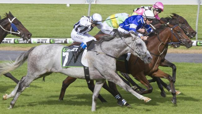 Daytona Grey a strong chance at Morphettville