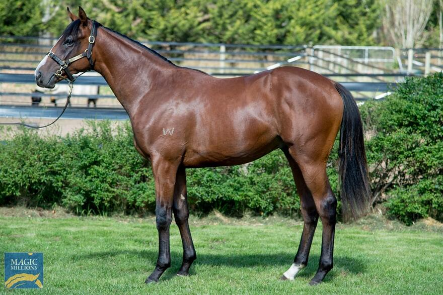 Lot 75 - Alpine Eagle - Zahlee Colt