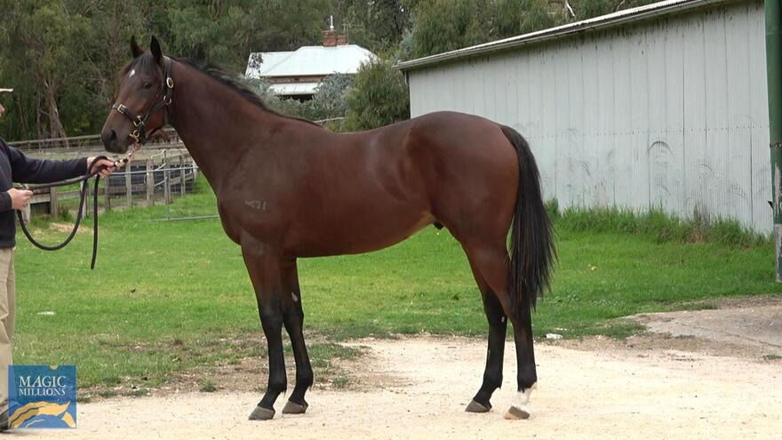 Lot 77 - Magnus - Wicked Secrets Colt