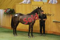 Horse Selection and Purchase.jpg