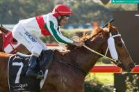 Ex-Hong Kong Galloper goes