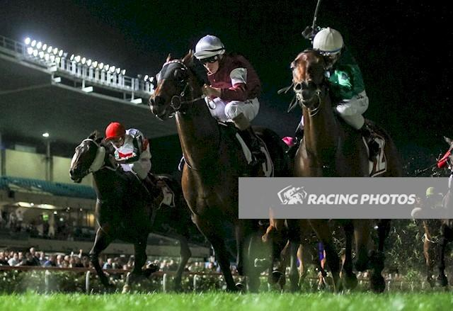 Rocky Takes On the Best at Moonee Valley