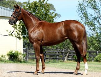 Just 10% left in Sebring filly with ROB HEATHCOTE...