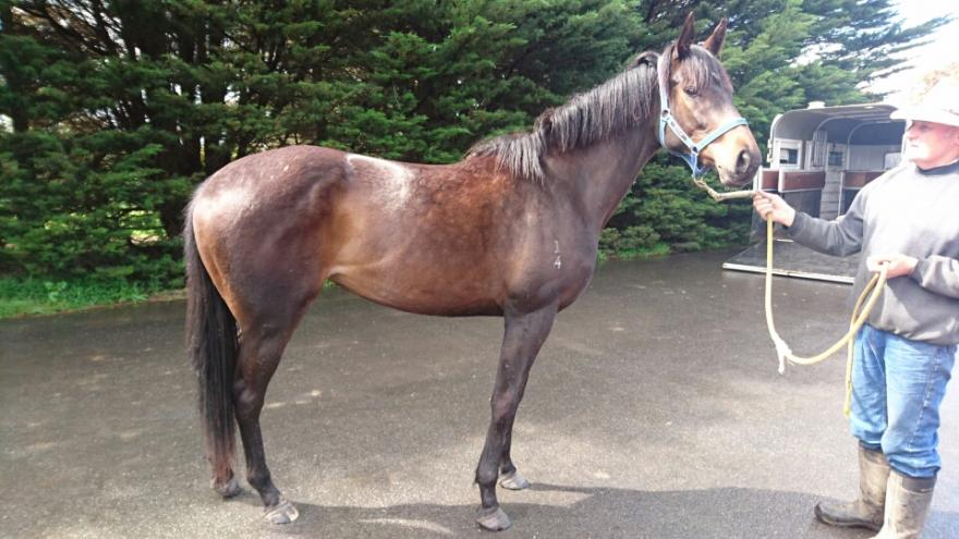 10% left...SO YOU THINK FILLY..we have one we think is exceptional!!