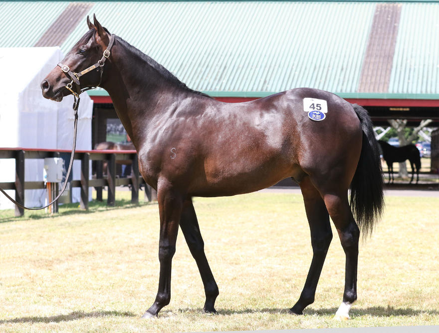 With Lee Freedman trains this HIGH CHAPARRAL colt!!! Don't miss...it's the last crop!